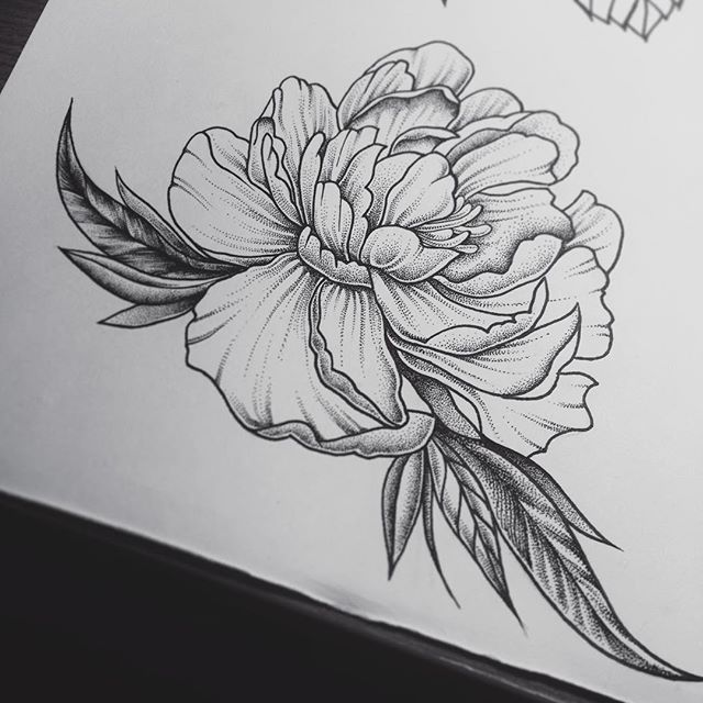 Peony Flower Line Drawing : The best peony drawing ideas on pinterest peonies