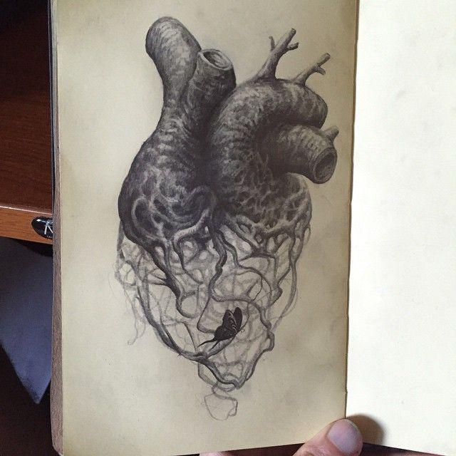 Fergus Dupleix Anatomical Heart Drawing