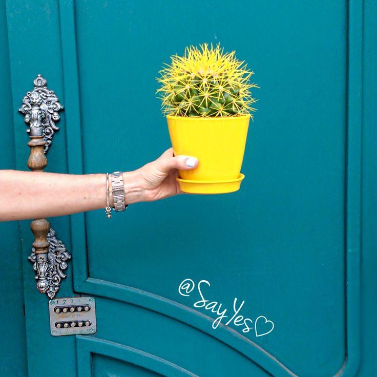 SAYYES кактус cactus