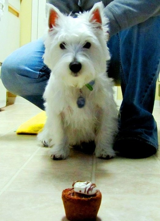 Westie Cakes Cookies By Bargainfancy 61 Food And Drink