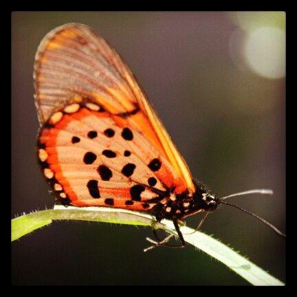 #CapeTown #nature #beautiful #butterfly
