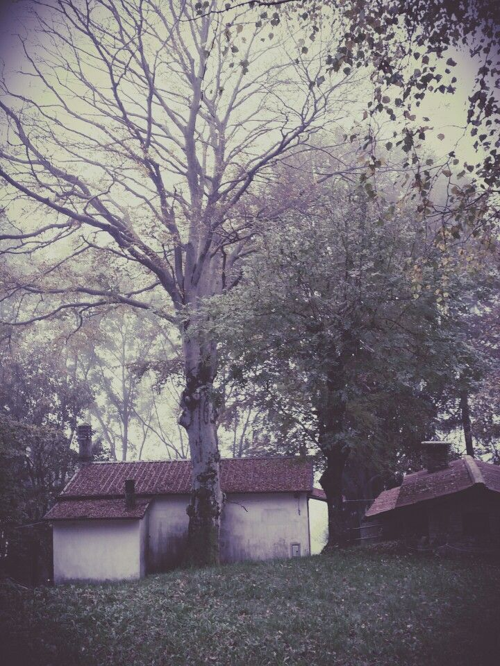 Tree#home