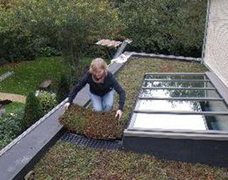 17 meilleures id es propos de toiture v g talis e sur pinterest patio en - Toiture vegetalisee extensive ...