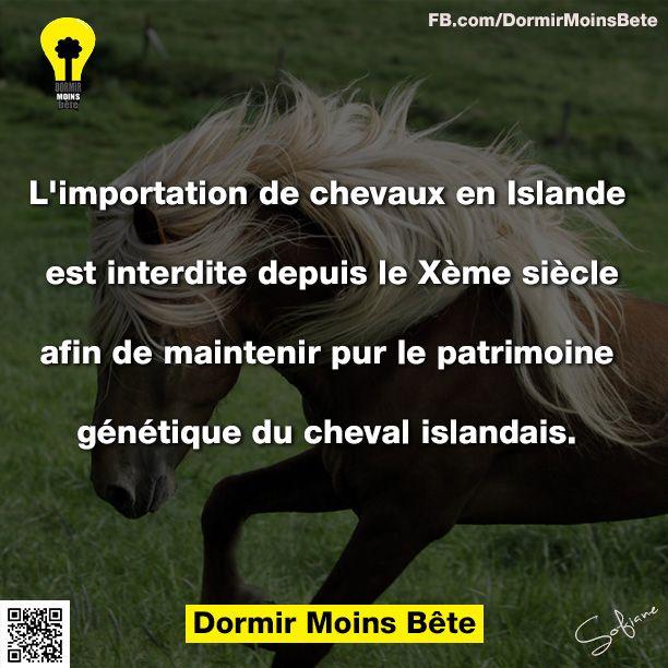 L'importation de chevaux en Islande est interdite depuis le Xème siècle afin de maintenir pur le patrimoine génétique du cheval islandais,