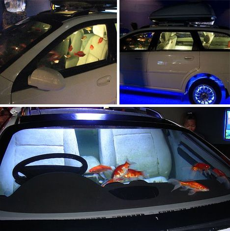 Holy water 24 amazing aquariums and fish tanks for Car fish tank