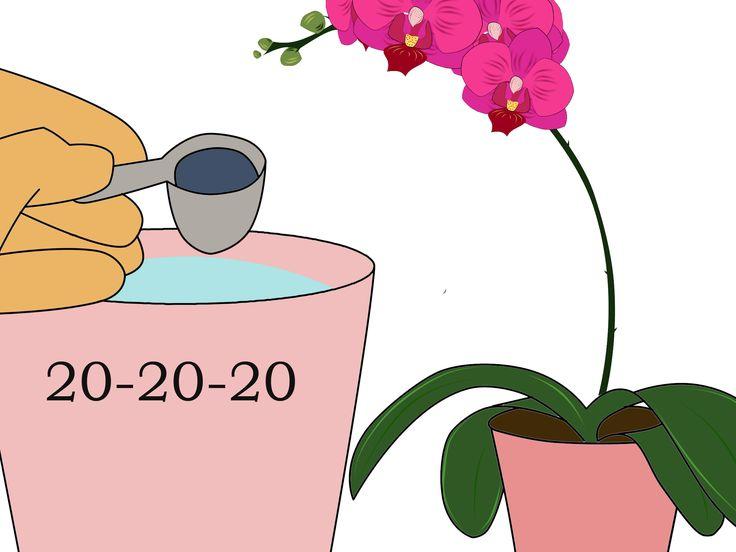 La orquídea que más comúnmente compra la gente es la Phalaenopsis. Lamentablemente, éstas a menudo son desechadas después de que les caen las flores. ¡Con el cuidado apropiado, tu orquídea puede florecer varias veces al año! Identifica que ...