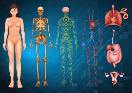 Intuitív Anatómia a Theta Healingben - Mit jelent? Miről szól?