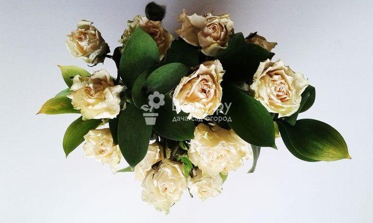 Как засушить розы своими руками и сделать букет
