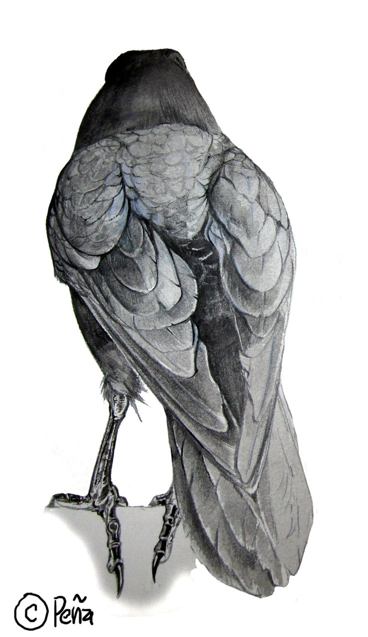 raven from the back by Reptangle.deviantart.com