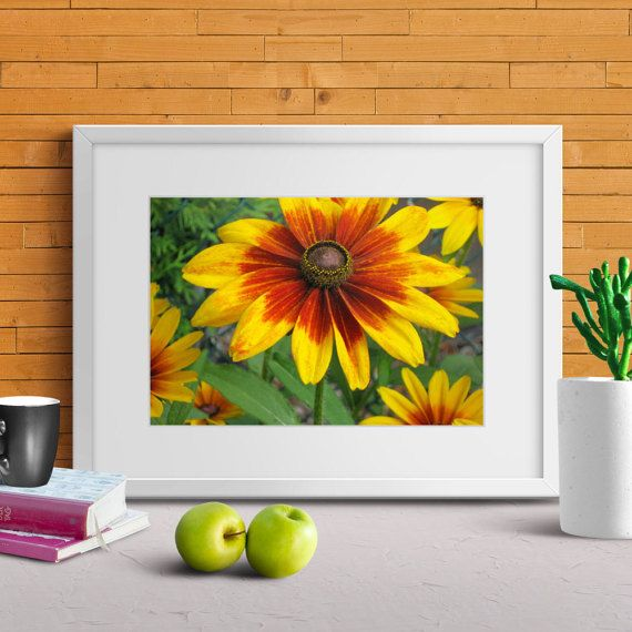 FREE SHIPPING TO CANADA/US FEATURED PRINT! This deal expires Sunday, October 16th at midnight eastern time zone! #Contemporary #Flowert #Print #Gaillardia #TruImagesPhotoArt