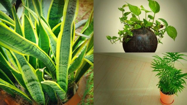 Oltre 25 fantastiche idee su piante da ombra su pinterest - Piante interno poca luce ...