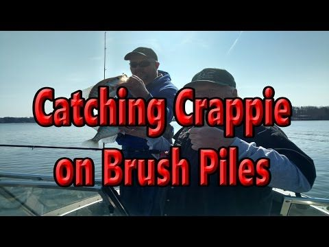 Catching Crappie on Brush Piles,how to catch crappie,tip for using jigs,crappie fishing tips - (More info on: https://1-W-W.COM/fishing/catching-crappie-on-brush-pileshow-to-catch-crappietip-for-using-jigscrappie-fishing-tips/)