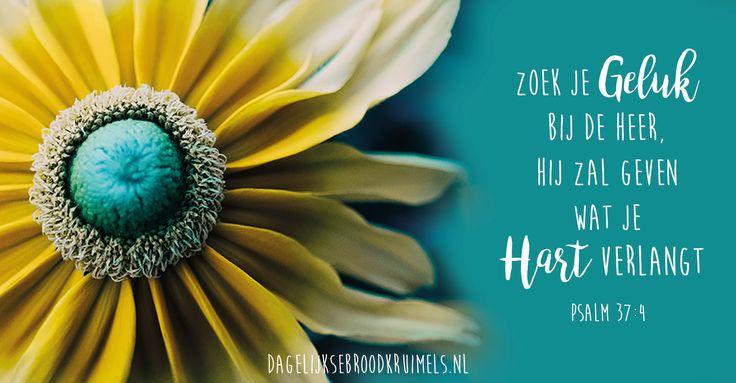 Zoek je geluk bij de Heer,Hij zal geven wat je hart verlangt. Psalm 37:4