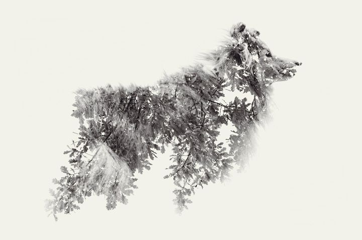 By Christoffer Relander #photography #dog