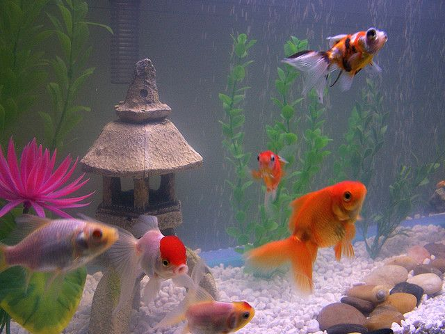 Not properly planning your design will cause a number of problems. The first is that you may not like the end product and will keep making changes, moving the fish tank decorations a number of times, adding and subtracting stuff until you're satisfied.