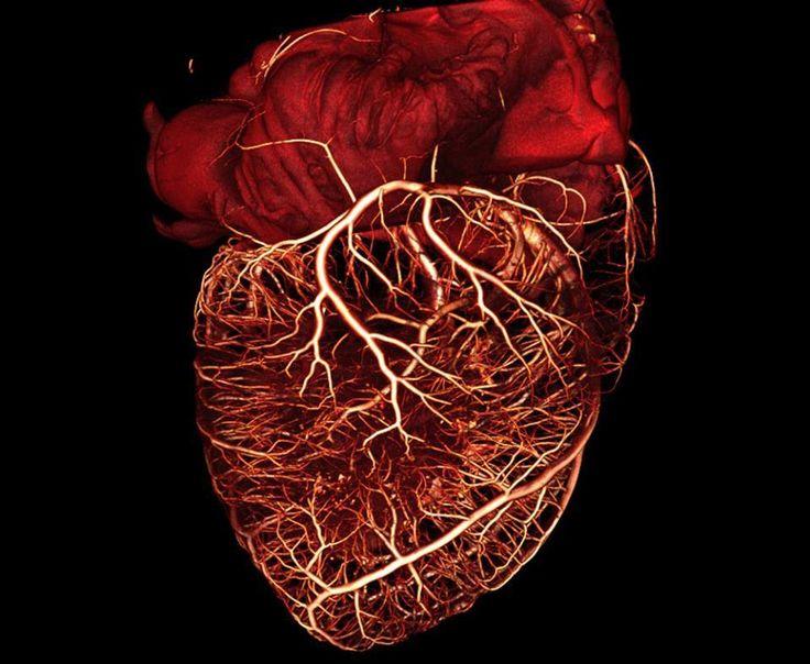 446 best Imágenes de medicina y anatomía alucinantes images on ...