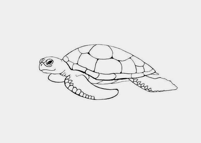 Perfect Color Books For Kids