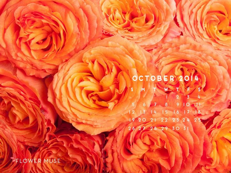 October 2014 Calendar - Download for free on Flower Muse Blog: http://www.flowermuse.com/blog/october-2014-calendar/