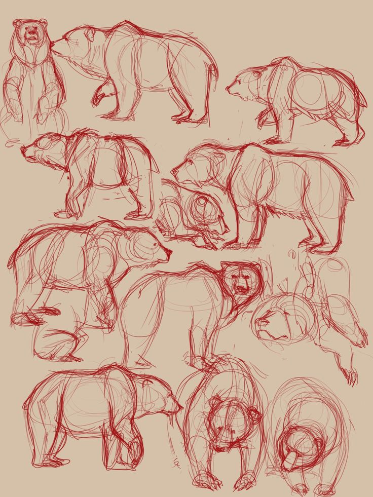 Bear sketches 3