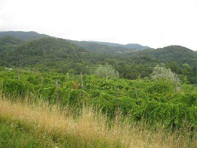 APPASSIONARSI: Di nuovo in pista... anzi per campi, colline e bos...