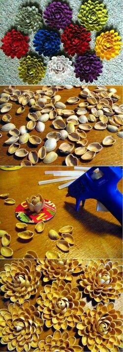 .Conchas