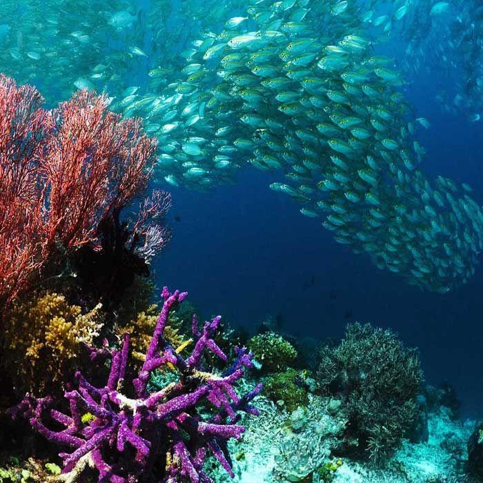 Il y a quantité de spots magnifiques en Thaïlande mais pour moi deux d'entre eux se détachent du lot: Anemone Reef et Richelieu Rock