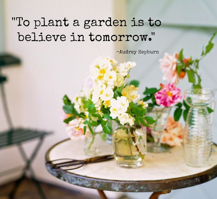 To Plant A Garden Is To Believe In Tomorrow Quotes Ponderings Pinterest Best Favorite