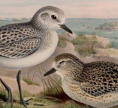 Pretty Vintage Birds by the Sea Image!