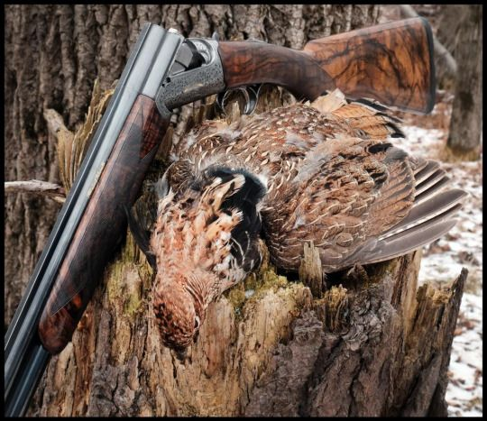 Gentleman Bobwhite | Shotguns | Grouse hunting, Hunting ...