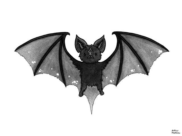 Картинки летучих мышей для тату