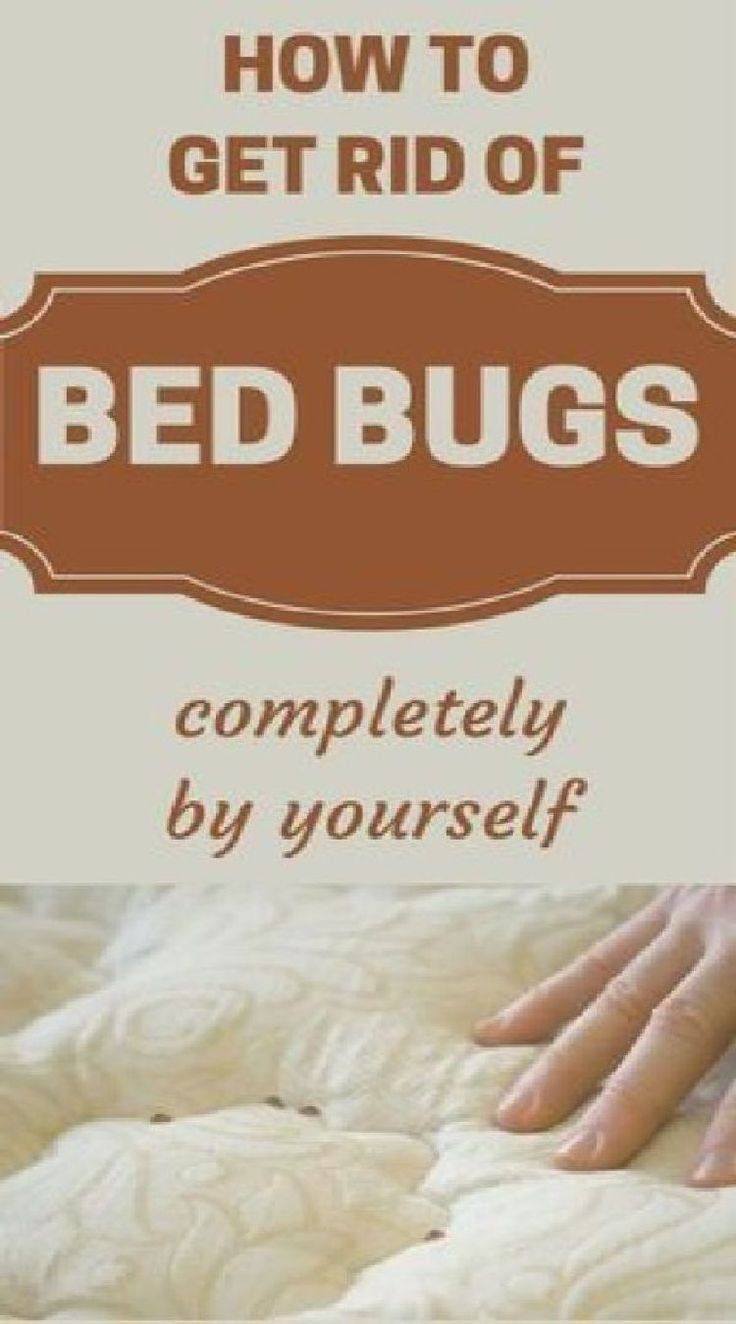 Destroy bed mites with this trick in 2020 rid of bed