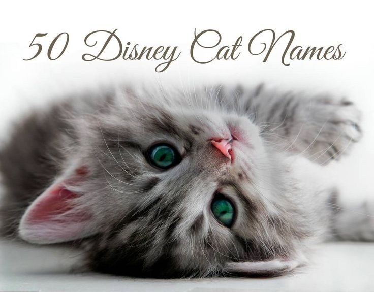 Looking for a whimsical Disney cat name for your kitten? Here is a list of all 50 of the ever-so-famous Disney cats, along with which movies they appeared in!