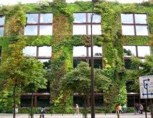 Een muur van planten, die heel erg helpt bij het isoleren.