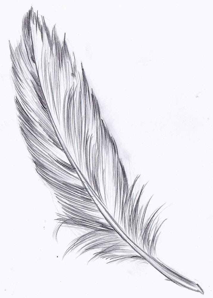 pin by val on draw angel and bird wings  wing variations
