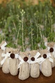 Tree sapling wedding favors