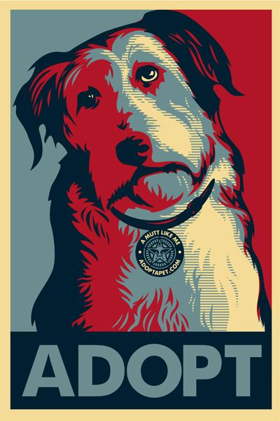 Mix Breeds make some of the best pets. There are also some great Purebreed dogs at local shelters.