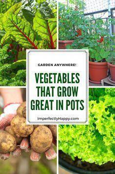 Gemüse in Töpfen Das beste Gemüse für den Anbau in Behältern