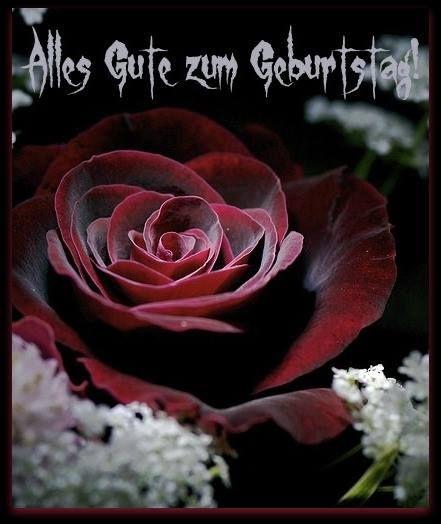 Schöne Rote Rose: Alles Gute Zum Geburtstag!