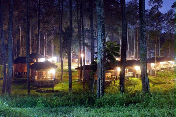Cikole, Temukan Wisata Hutan Pinus Ala Twilight di Lembang