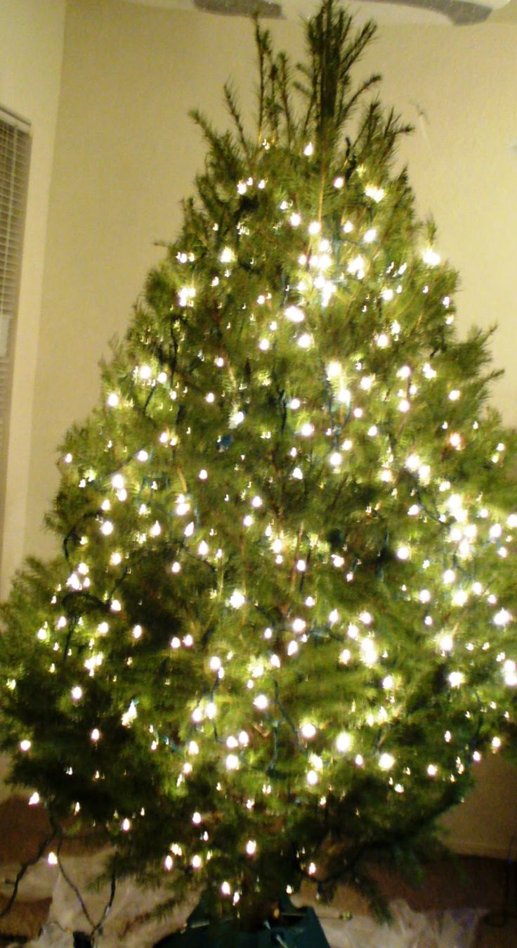Xmas tree lights - 3 PHOTO!