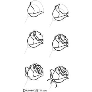 Mini Rose Drawing Google Search Art And Design