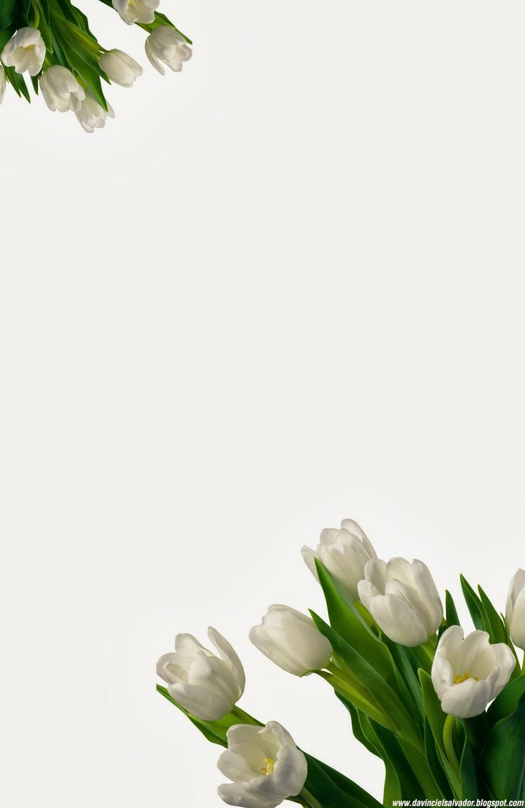 White #Tulips #Invitation for your #Sweet15 and #Sweet16