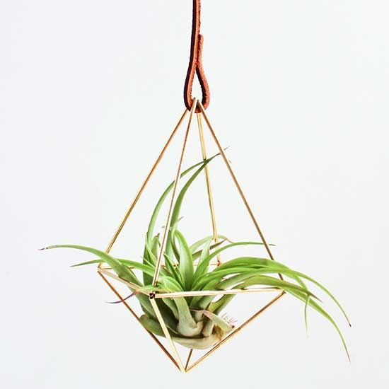 Air plants are trendy right now, and for good reason, @garden_therapy says! Not only are they low-maintenance plants, they are beautiful to look at and are extremely versatile. Need proof? Check out these air plant styling ideas that utilize jewelry, geodes, seashells, wreaths, wine corks, and more.