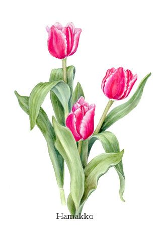 contemporary botanical approach to tulips