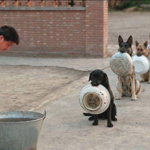 Полицейские собаки в Кит…