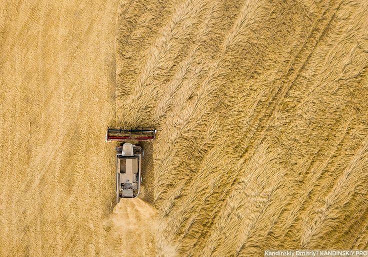 Урожай — National Geographic Россия