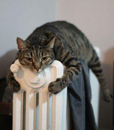 반드시 따뜻한 곳을 찾아내는 고양이 8