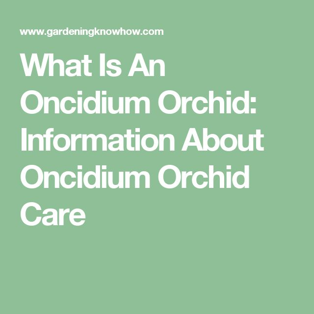 What Is An Oncidium Orchid: Information About Oncidium Orchid Care