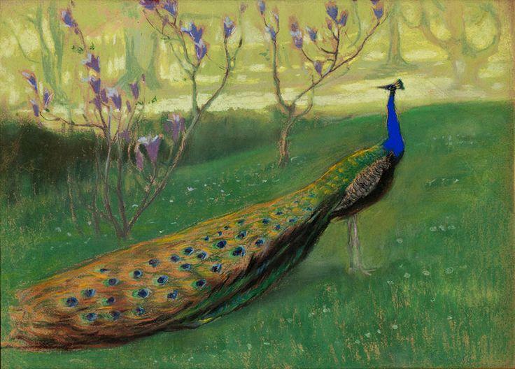 Kazimieras Stabrauskas. Peacock
