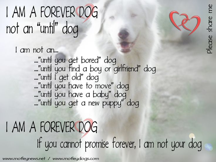 Shelter dogs are forever dogs. <3